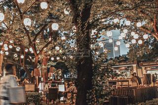 木のクローズアップの写真・画像素材[2315151]