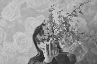 花の写真・画像素材[2916608]