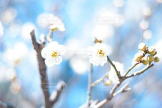 花のクローズアップの写真・画像素材[3014775]