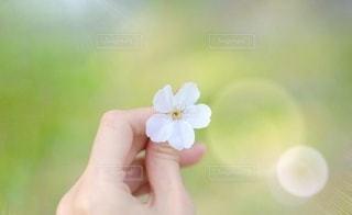 花のクローズアップの写真・画像素材[3498741]