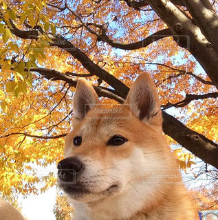 カメラを見て犬の写真・画像素材[1640639]