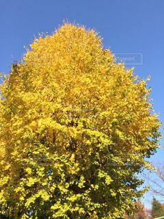 近くの木のアップの写真・画像素材[1650007]