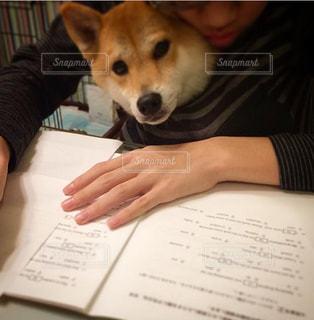 犬と一緒に受験勉強の写真・画像素材[1689992]