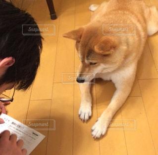 犬と一緒にお勉強の写真・画像素材[1695326]