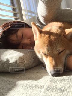 愛犬との昼寝の写真・画像素材[2027145]