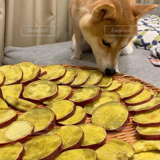 干し芋と犬の写真・画像素材[2814942]