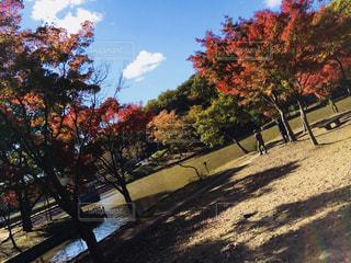 自然,秋,紅葉,秋空