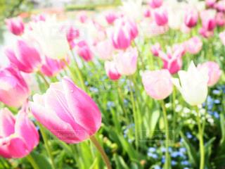 近くの花のアップの写真・画像素材[1440261]