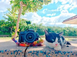 地面に座っている猫の写真・画像素材[3390170]