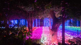 夜,ピンク,カラフル,幻想的,アート,樹木,イルミネーション