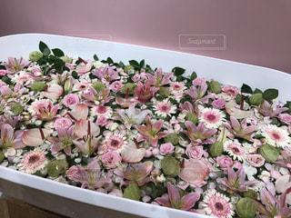 ピンク,お花,お風呂,flower,フォトジェニック,花風呂