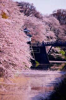 花,春,桜,ピンク,花見,お城,flower,japan,山形,cherry blossom,Spring,霞城公園,インスタ映え