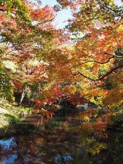 湯布院の紅葉の写真・画像素材[1628138]
