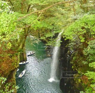 真名井の滝の写真・画像素材[1450775]