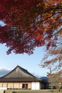 自然,風景,空,紅葉,景色,鮮やか,旅行,お出かけ,篠山