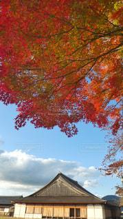 自然,風景,紅葉,景色,鮮やか,旅行,兵庫,お出かけ,モミジ,篠山,篠山城跡