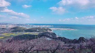 自然,風景,海,空,屋外,梅,花見,景色,梅林,兵庫