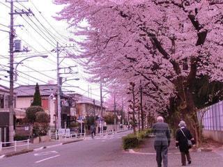 桜,東京,景色,夫婦,さくら