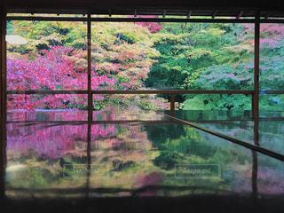瑠璃光院の紅葉🍁の写真・画像素材[1609553]