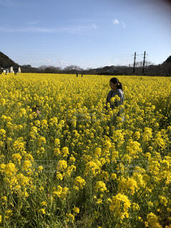 10代,自然,空,花,春,屋外,黄色,景色,お花見,伊豆,菜の花畑,娘,静岡県,1面
