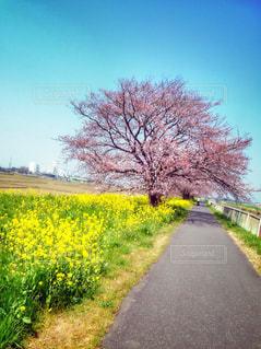自然,花,春,桜,綺麗,お花,お花見