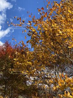 空と紅葉の写真・画像素材[3846484]