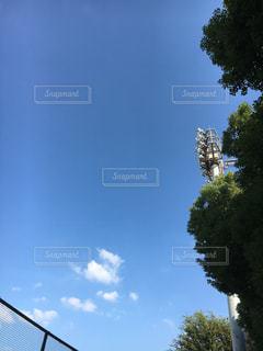 自然,空,青空,樹木,日中