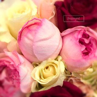 花,ピンク,花束,つぼみ,ブーケ,蕾,pink,草木