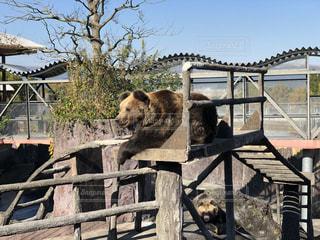 可愛い,クマ,でかい,熊本ファームランド