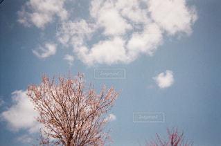 自然,風景,空,春,桜,屋外,ピンク,景色,日中,桜春