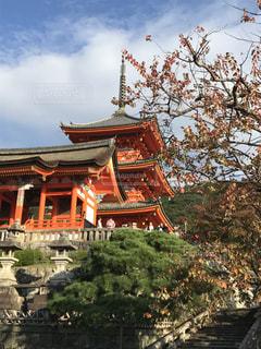 秋,清水寺,紅葉,屋外,京都,観光