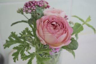 花,ピンク,フラワー,桃色