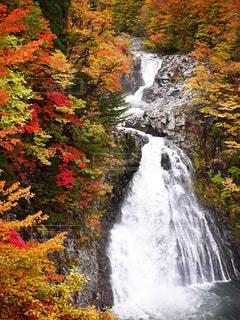 法体の滝の紅葉の写真・画像素材[1448506]
