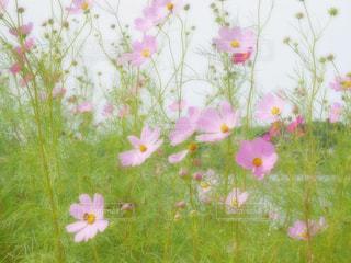 近くの花のアップの写真・画像素材[1454767]