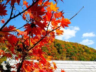 風景,秋,紅葉,雲,秋空,秋田県湯沢市,三途川渓谷