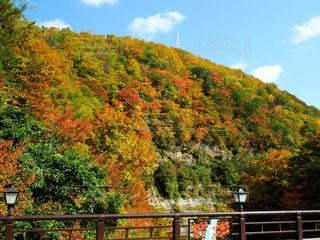 三途川渓谷の紅葉🍁の写真・画像素材[1466887]