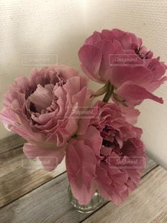 花,ピンク,ピンク色,桃色,pink,ラナンキュラス