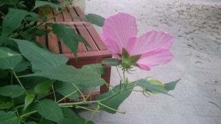 花,ピンク,植物,代々木,ピンク色,桃色,pink,代々木ビレッジ