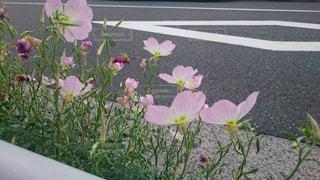花,ピンク,植物,ピンク色,桃色,pink