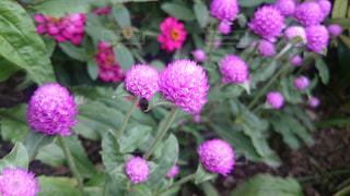 近くの花のアップの写真・画像素材[1459251]