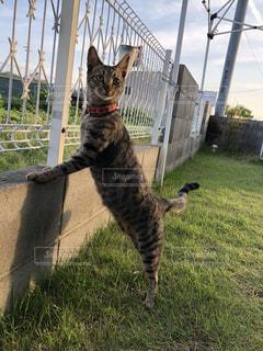 猫,ねこ,野良猫,しっぽ,cat,キジトラ,ネコ