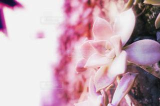 女性,花,ピンク,flower,桃色,pinc