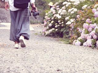 花,散歩,落ち着き,野外,お散歩,フォトジェニック,一人歩き,色・表現