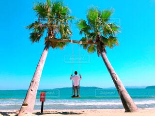 水の体の前でヤシの木とビーチの写真・画像素材[1445036]