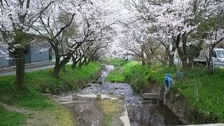 空,春,桜,水,幻想的,川,水面,田舎,草,草木