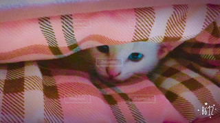 猫,屋内,ファブリック