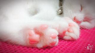 猫,屋内,ねこ,子猫,肉球,可愛い,cat,ピンク色,ネコ