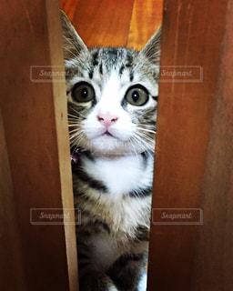 猫,自然,屋内,ねこ,子猫,可愛い,cat,ビックリ,真顔,ネコ
