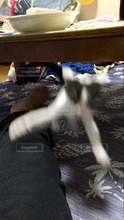 猫,室内競技,飼い主傷だらけ5分前,猫の大運動会,近接格闘競技