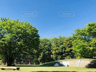 公園の大きな木の写真・画像素材[3174825]